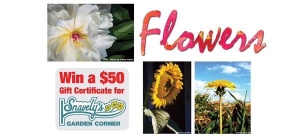 Flowers Photo Contest